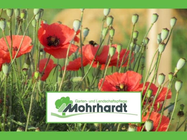 Garten- und Landschaftspflege Mohrhardt StutenseeSeit über 20 Jahren Ihr Partner vor Ort!